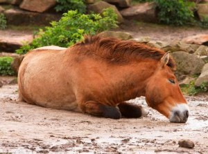 Checking Head Injuries in Horses