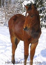 colt in the snow