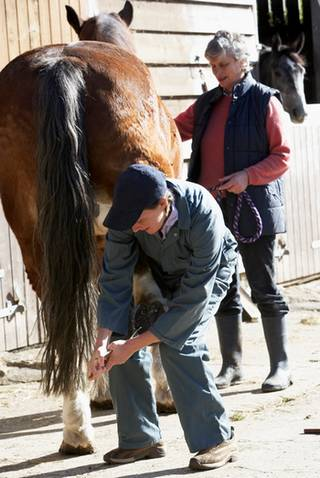 Vet checking a horse's foot
