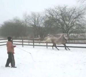 Mastering Natural Horsemanship