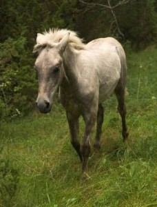 Bone Breaks in Horses
