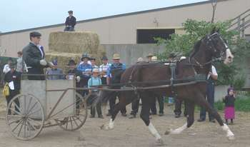 horse auction at St. Jacobs