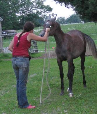 teaching horse ground manners