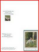 horse in forest card