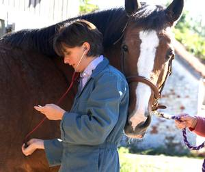 vet checking horse with stethoscope