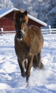 Care for Horses in Winter