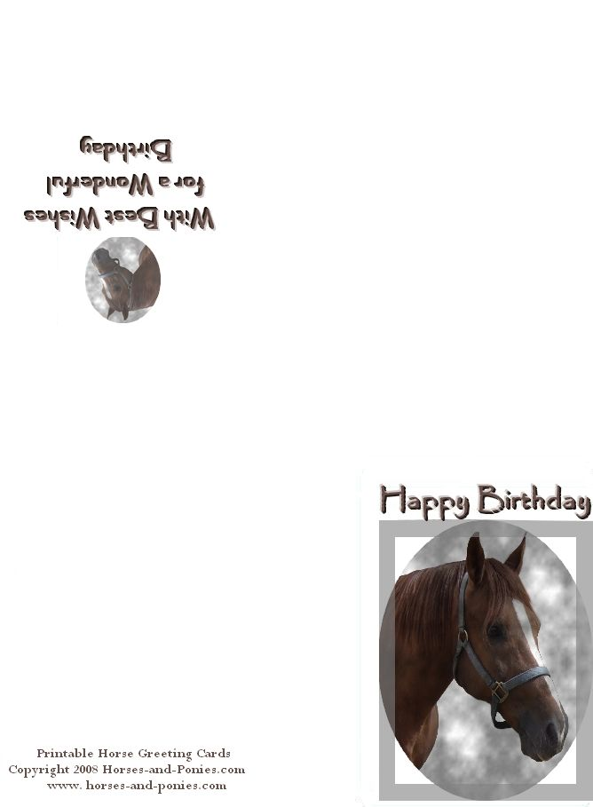 Arabian Horse Birthday Card