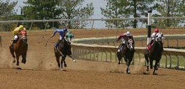 thoroughbred horse race